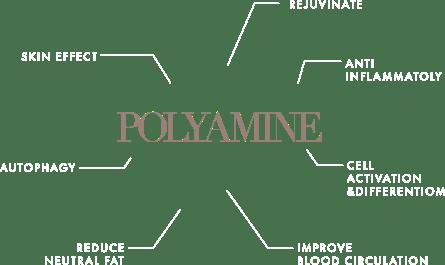 コラーゲン産生やアンチエイジングなど、成長因子であるポリアミンに期待される作用の一覧